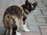 アレアレコレアレ とりあえず最終話 - 愛犬家の猫日記