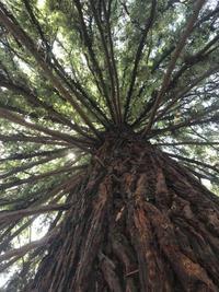 森の香り成分フィトンチッド♪ - Aromaticstyle