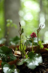 野の花光る  - 風の彩り-2