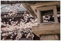 桜と寺廻り - 日々是好日 Here comes the sun.