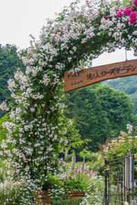 薔薇祭り - デジカメ写真集