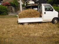 小麦 椎 そして 田植え - ひろしの「どっこい田んぼのジャージーデー」