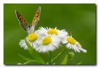 われ蝶と戯れり。 - 気まぐれフォト