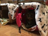 茶タロウの激しいフミフミ(動画) - 「両手のない猫」チビタと愉快な仲間たち