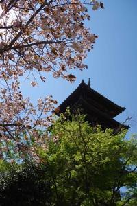 2017.4.23 八重桜と新緑と五重塔 - 下手糞PHOTO BLOG