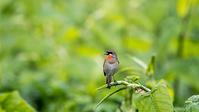 至る処で遭遇 - 趣味の野鳥撮影