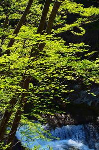 東北の名のなき滝に五月青葉 - 風の香に誘われて 風景のふぉと缶