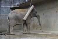 ゾウさんは力持ち! - 今日ものんびり動物園