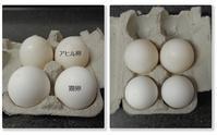 鶏卵 vs 家鴨卵 - f's note ak