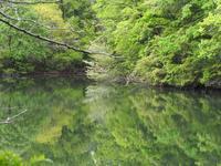 皐月から水無月へ 5月の森 - 鹿深の森