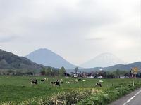 羊蹄山と尻別岳と牛たち - little good things