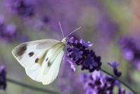 花と蝶 - i feel fine
