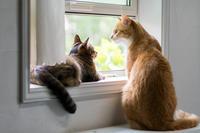 今日はチャルとリッちゃん - 猫と夕焼け