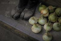 収穫どき - フォトな日々