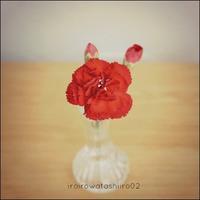 ● 花の効果。 - 色々ワタシイロ02