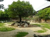 クロサイのライ - クロサイ ブログ ~フウカの種~