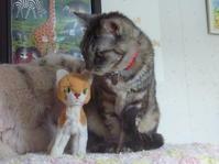 本物 VS 偽物 Cat どっちがかわいい? Part.1 - ヴィンテージ・シュタイフと仲間たち