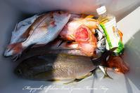 2017,05/29.31 鯛ラバ - 鯛ラバ遊漁船  Miyazaki Offshore Boat Game Marine Frog
