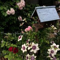 5月最後のお庭 - misaの庭暮らし~Abandon~