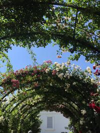 薔薇の園 - itscorbeille Diary-イツコルベイユ