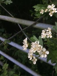 ウェールズは花の季節です - イギリス ウェールズの自然なくらし
