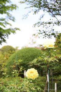 Someone like him - A primrose by the river's brim