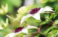 花びらのない花 - 丹馬のきょうの1枚