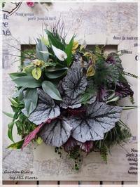 With beautiful indoor plants - Garden Diary
