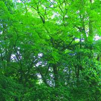 """""""三葉""""と""""瀧""""が御祭神? 丹生神社で驚き。 - 三恵 poem  art"""