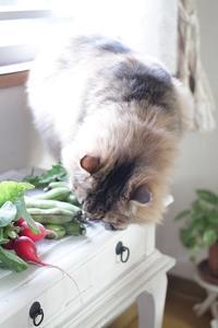 2週間ごとの有機野菜セット - きょうだい猫と仲良し暮らし