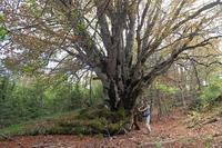 巨木と花に出会い被災地を望む、イタリア - ペルージャ発 なおこの絵日記 - Fotoblog da Perugia