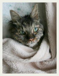 ご長寿猫 はんぞう との暮らし 「5月1日~5月5日の はんぞう」 - たびねこ