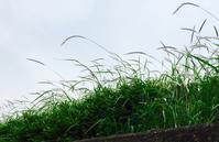 雨の気配 - 「美は観る者の眼の中にある」