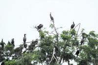 野鳥公園でのんびり過ごす水鳥たち - ぶらり散歩 ~四季折々フォト日記~