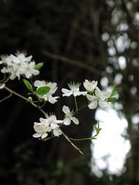 夢で排毒 - Flower Essence Laboratory