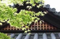 京都へ⑤(妙心寺-2)2017.GW - 風の中で~