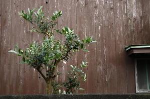 雨後のお庭 - photographs works and life