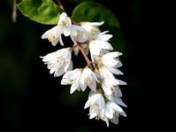 ウツギの花が咲く頃・・・ - 自然がいっぱい3