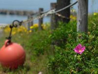 初夏の海辺 - デジタルで見ていた風景