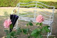 薔薇に包まれて - 「古都」大津 湖国から