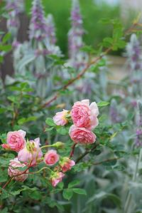 5/31 景色に溶け込む優しい色 - 「あなたに似た花。」
