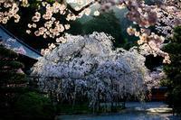 桜2017! ~毘沙門堂~ - Prado Photography!