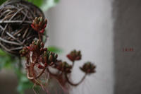 上を向いて - CHIROのお庭しごと