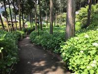 花の茶屋6月からスタートです - 【飴屋通信】 京都の飴工房「岩井製菓」のブログ