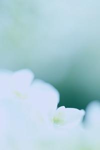爽やかな朝 - 「美は観る者の眼の中にある」
