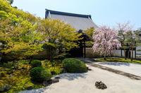 京都の桜2017 妙顕寺のお庭 - 花景色-K.W.C. PhotoBlog