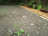 雹(ひょう) - 浅間高原・北軽井沢 ペンション・ローエングリンの高原日記