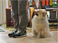 犬のしつけ方教室 6/1 - SUPER DOGS blog
