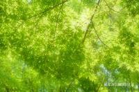 ミドリ・みどり・緑 『日比谷公園』(2) - 写愛館