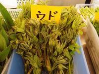 ニセウで採れたてを食べた山菜22種 - へなちょこおばんざい